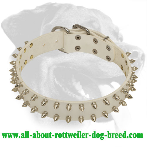 Noble Look Spiked Rottweiler Collar for Dog Shows