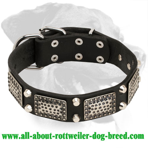 Superb Rottweiler Leather Collar with Vintage Plates
