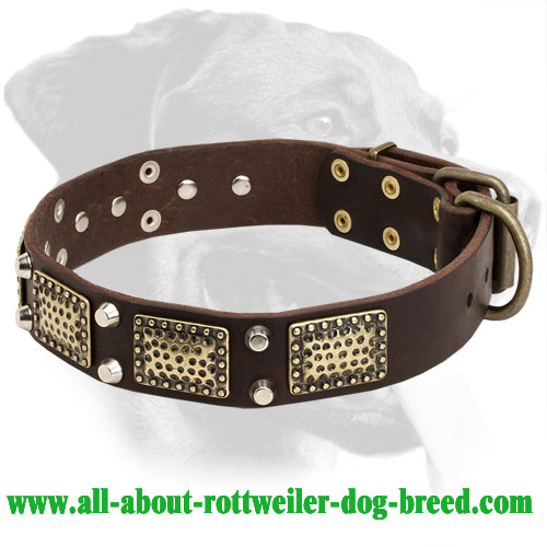 Rottweiler Leather Collar with Nickel Cones & Brass Plates