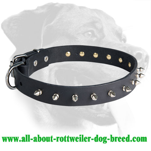 Phenomenal Rottweiler Spiked Leather Collar
