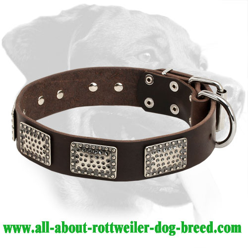 Rottweiler Everyday Collar for Great Dog Appearance