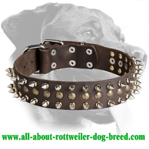 Fancy Rottweiler Leather Collar with Spikes and Studs