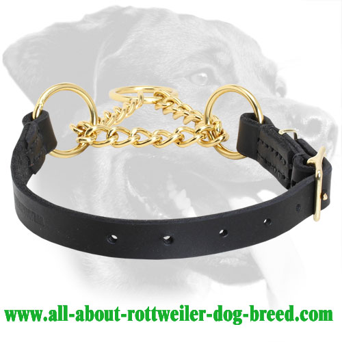 Order Rottweiler Martingale Behavior Correction Collar Brass Chain
