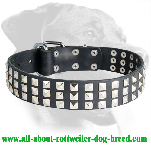 Rottweiler Leather Collar with Silver-Colored Pyramids