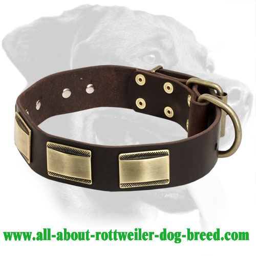 Rottweiler Custom Leather Collar with Brass Plates