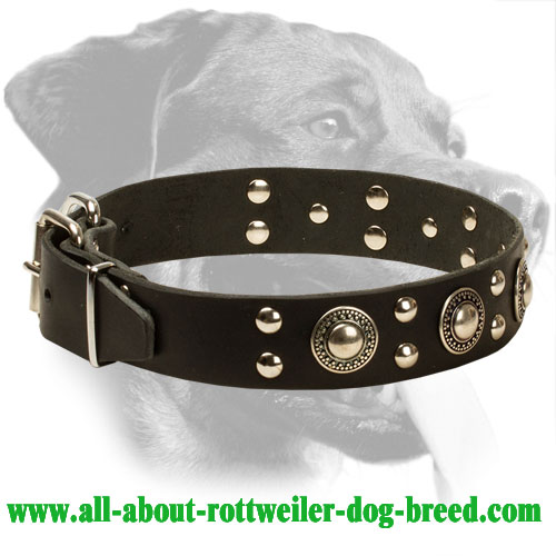 Trendy Rottweiler Collar with Mixed Decorations