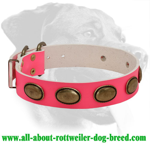 Rottweiler Trendy Collar with Brass Decorations