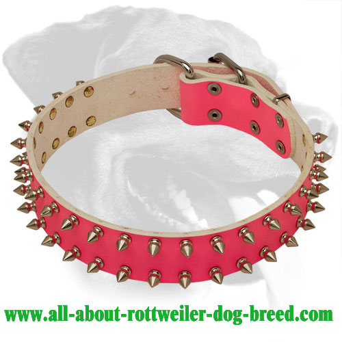 Premium Style Rottweiler Genuine Leather Collar