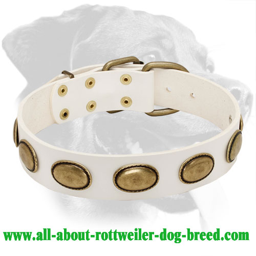 Rottweiler Genuine Leather Collar with Brass Decorations