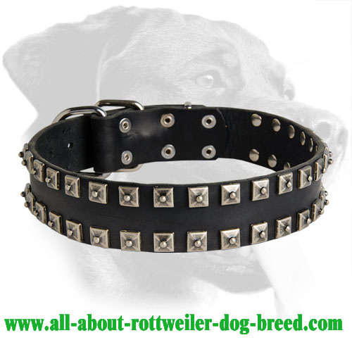 Outstanding Studded Leather Collar for Rottweiler