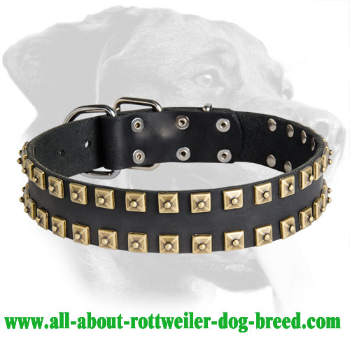 Exclusive Design Studded Leather Collar for Rottweiler