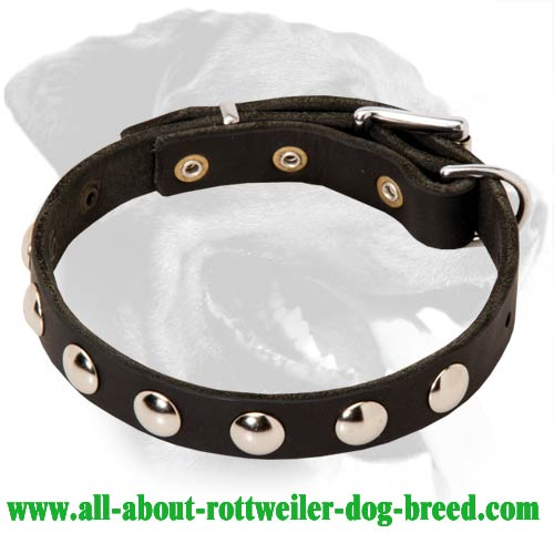 Elegant Thin Rottweiler Collar with Beautiful Nickel Studs