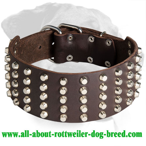 Exceptional Studded Leather Collar for Rottweiler