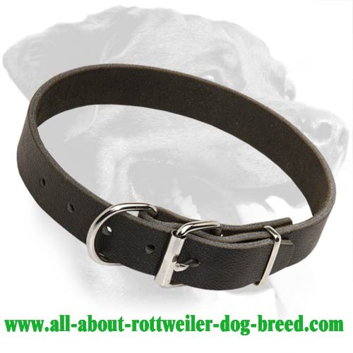 Everyday Leather Collar for Rottweiler