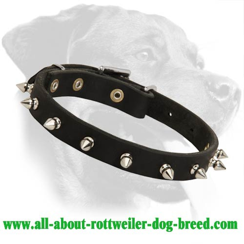 Spiked Leather Collar for Rottweiler