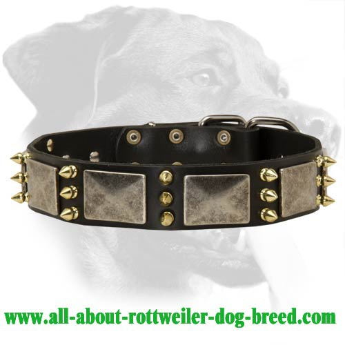War Spiked Leather Collar for Rottweiler