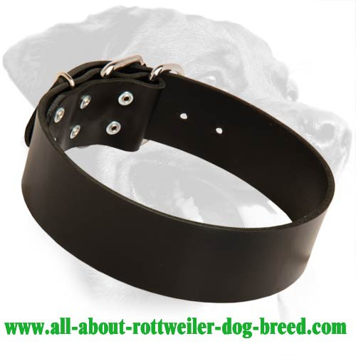 Extra Wide Leather Collar for Rottweiler