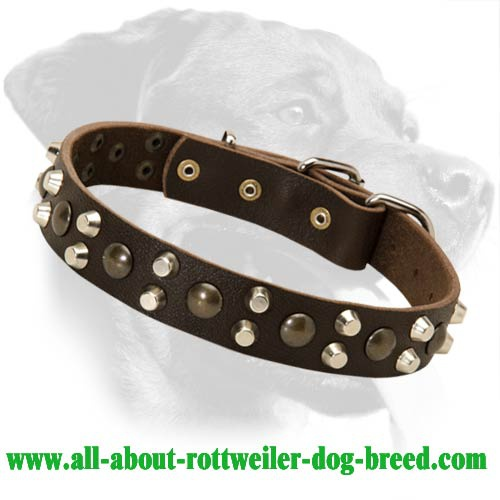 Leather Rottweiler Collar Decorated with Studs