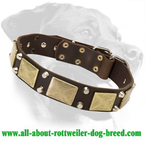 Leather Collar with brass massive plates for Rottweiler