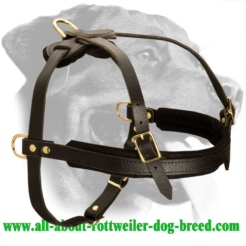 Strong Leather Rottweiler Harness for Training, Pulling and Walking
