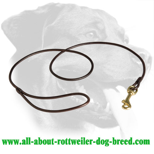 Outstanding Leather Rottweiler Leash for Dog Shows