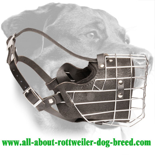 Fully Padded Wire Cage Rottweiler Muzzle for Training - Click Image to Close
