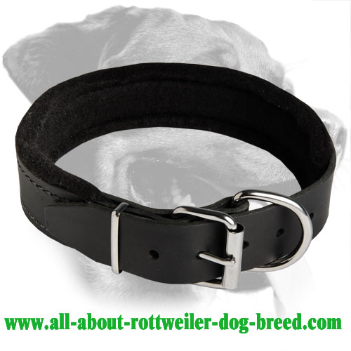 Amazing Padded Leather Collar for Rottweiler