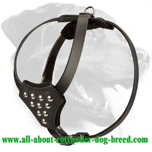 Studded Leather Rottweiler Harness for Puppy Walking and Training