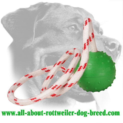 Dog Rubber Toy For Rottweiler Retrieve Training (Small)