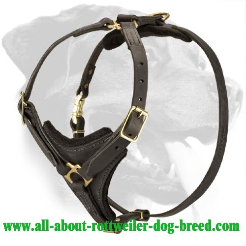 Tracking Leather Harness for Rottweiler