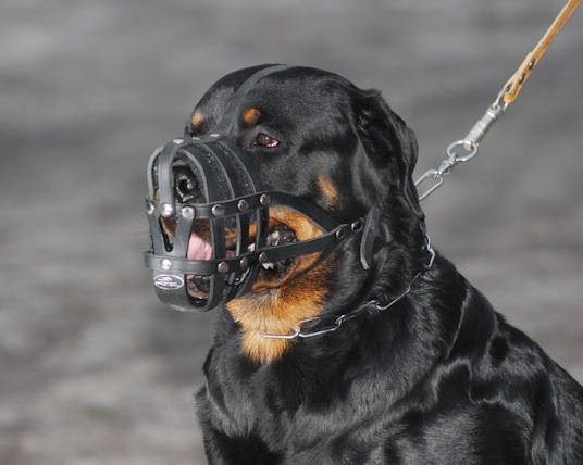 Rottweiler leather dog muzzle - Super Ventilation dog muzzle