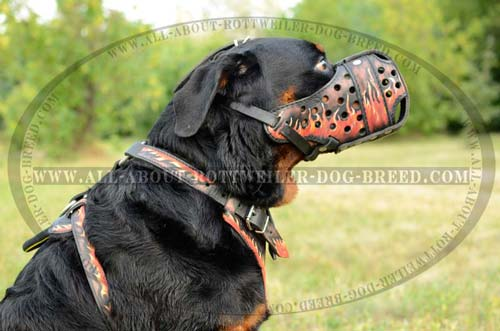 Rottweiler Agitation Training Leather Muzzle