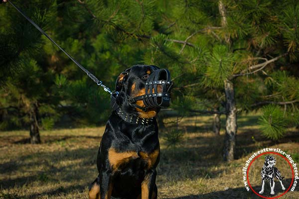 Walking leather Rottweiler basket muzzle