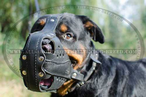 Handcrafted leather Rottweiler muzzle