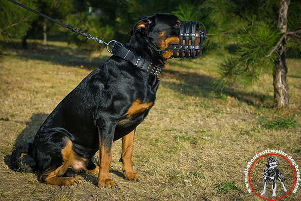 Leather basket muzzle for Rottweiler with free air flow