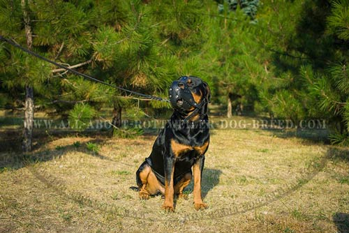 Reliable leather dog muzzle for Rottweiler