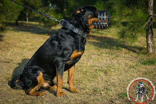Stitched and riveted leather dog muzzle for Rottweiler