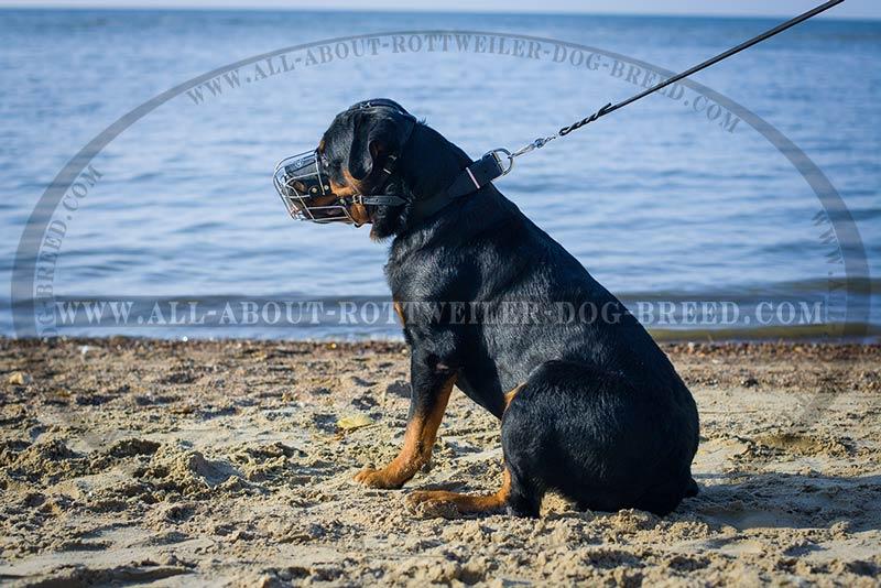 Get Walking Wire Basket Rottweiler Muzzle | Socializing | Obedience