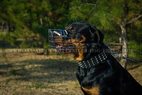 Large Wire Muzzle for Rottweiler