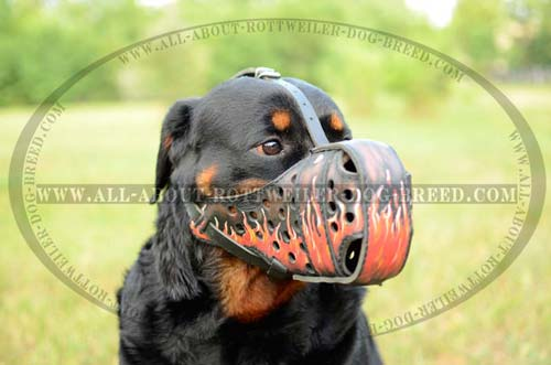 Rottweiler Leather Muzzle for Attack Training