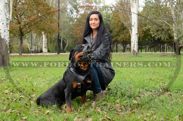 Basket Leather Dog Muzzle for Rottweiler