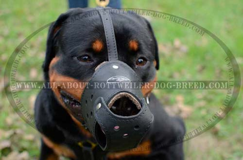 Perfectly Adjustable Leather Dog Muzzle for Rottweiler