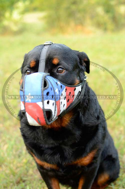 Adjustable Painted Leather Rottweiler Muzzle for Walking and Training