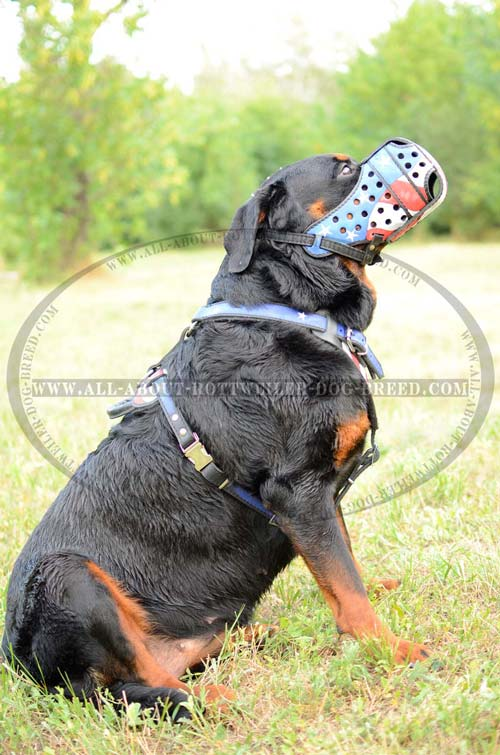 Hand Painted Leather Rottweiler Muzzle for True American Patriots