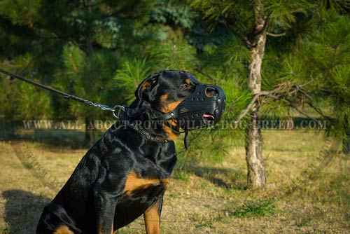 Ventilated Leather Dog Muzzle for Rottweiler Professional Training