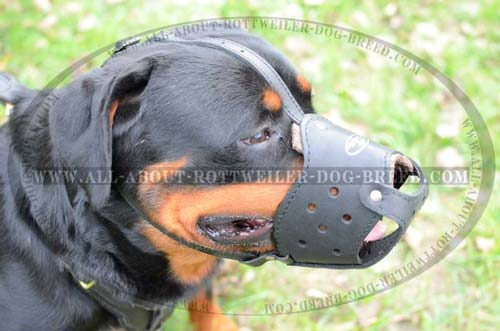 Well Ventilated Leather Dog Muzzle for Rottweiler Walking