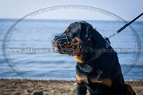 Well Ventilated Metal Wire Cage Dog Muzzle for Rottweiler