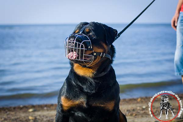 Rottweiler wire-basket-muzzle rust-resistant riveted better-comfort