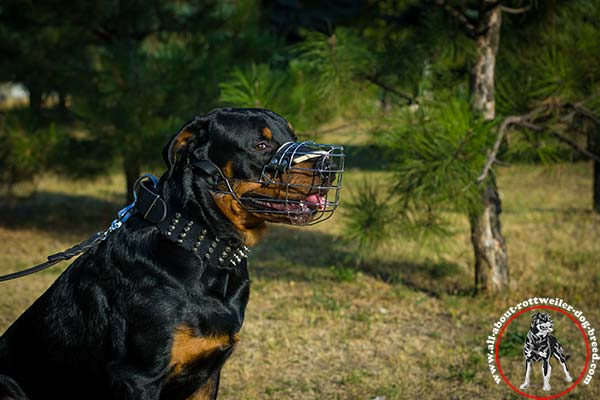 Training wire cage Rottweiler muzzle