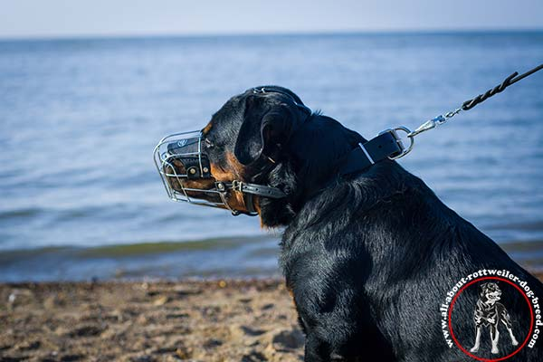 Wire cage Rottweiler muzzle with leather straps